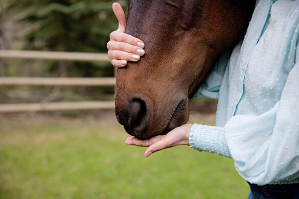 close up of horse muzzle