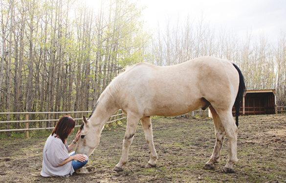 woman sitting with horse